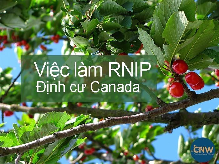 Việc làm RNIP định cư Canada