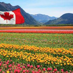 Canada chính thức triển khai chương trình Thí điểm Nông nghiệp thực phẩm Agri-food