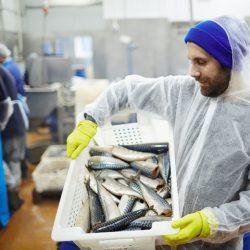 Việc làm định cư Canada 2021: Công nhân nhà máy chế biến hải sản