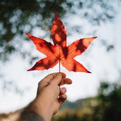 Cập nhật thời gian xử lý hồ sơ định cư Canada mới nhất (4/2021)