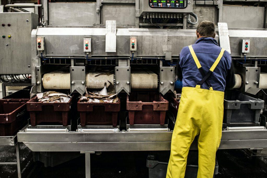 Nhà máy chế biến thực phẩm - việc làm EB-3