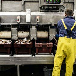Việc làm định cư Mỹ sở hữu thẻ xanh: công nhân nhà máy chế biến thực phẩm